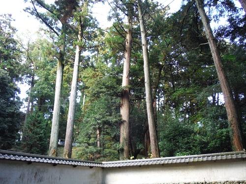 takao-2015-3.jpg