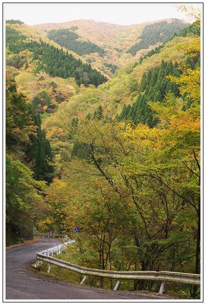 2015年10月27日 行者環林道 (6)