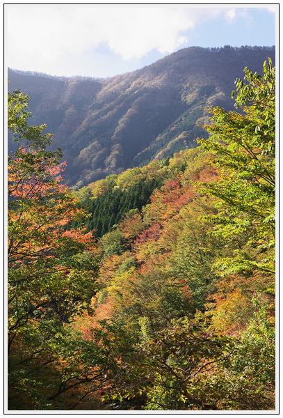 2015年10月27日 行者環林道 (10)