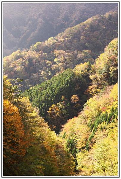 2015年10月27日 行者環林道 (13)
