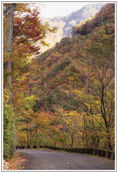 2015年10月27日 行者環林道 (19)