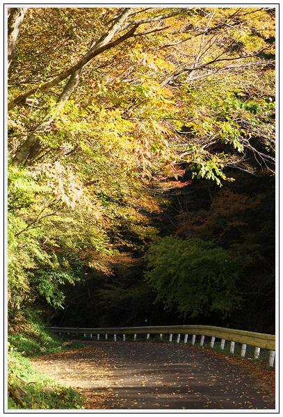 2015年10月27日 行者環林道 (20)