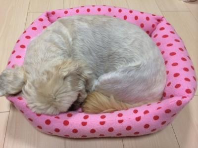 もんちベッド小さい