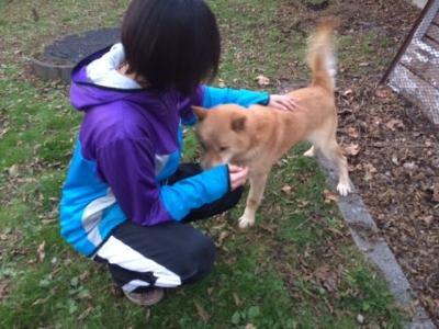 北海道犬12