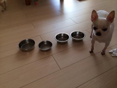 ご飯の準備ができました