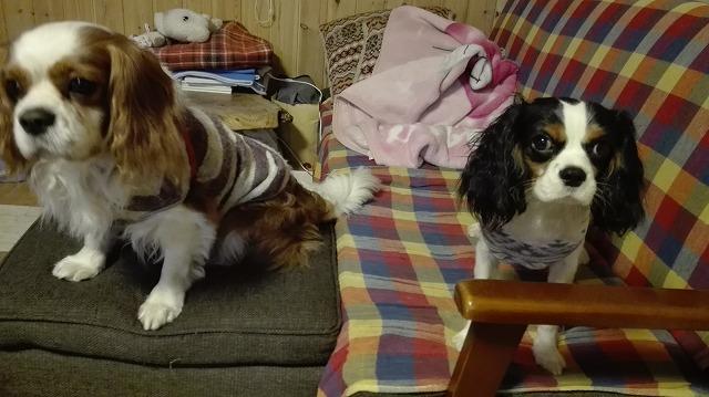 ルーシー&アビー