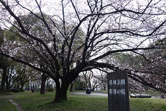 名城公園桜彫刻