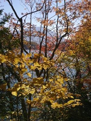 湯ノ湖13