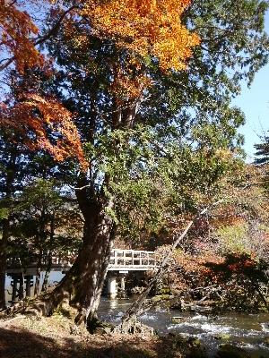 湯ノ湖25