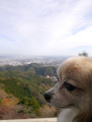 高尾山14