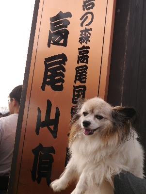 高尾山21