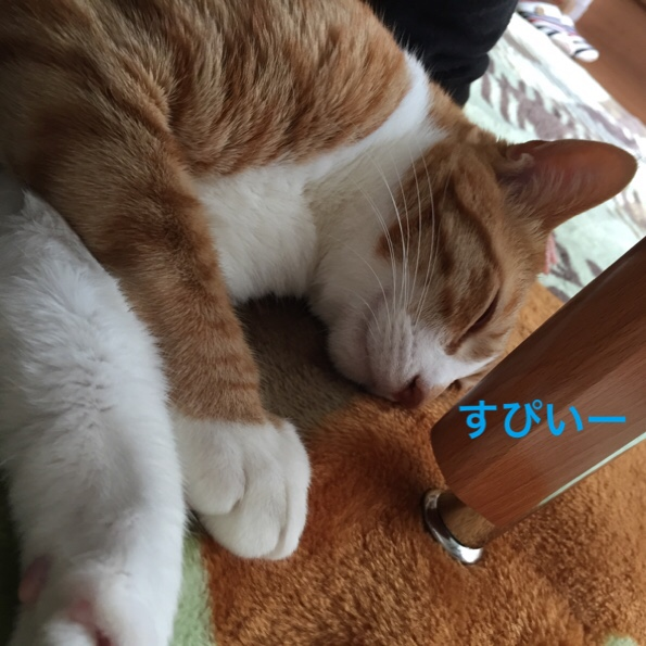 fc2blog_20160226074426f39.jpg