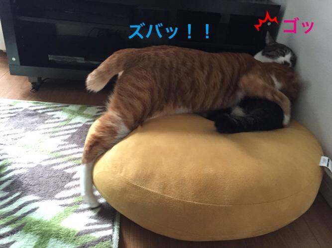 fc2blog_2016032312512861b.jpg