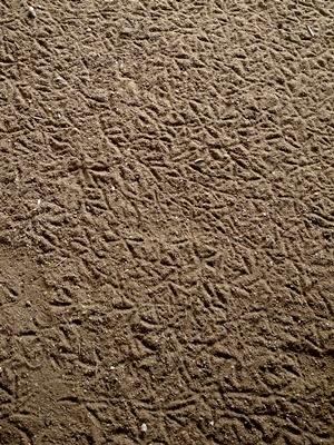 カラスの足跡1604