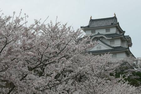 花曇の大多喜城