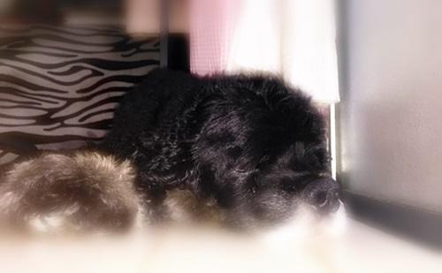 リキの寝顔