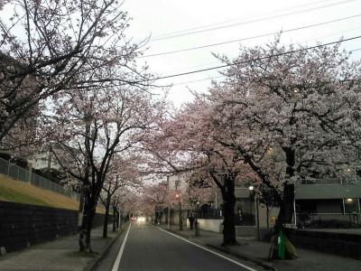 20160402桜の回廊