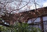 2016,3,24萬花楼お庭 049