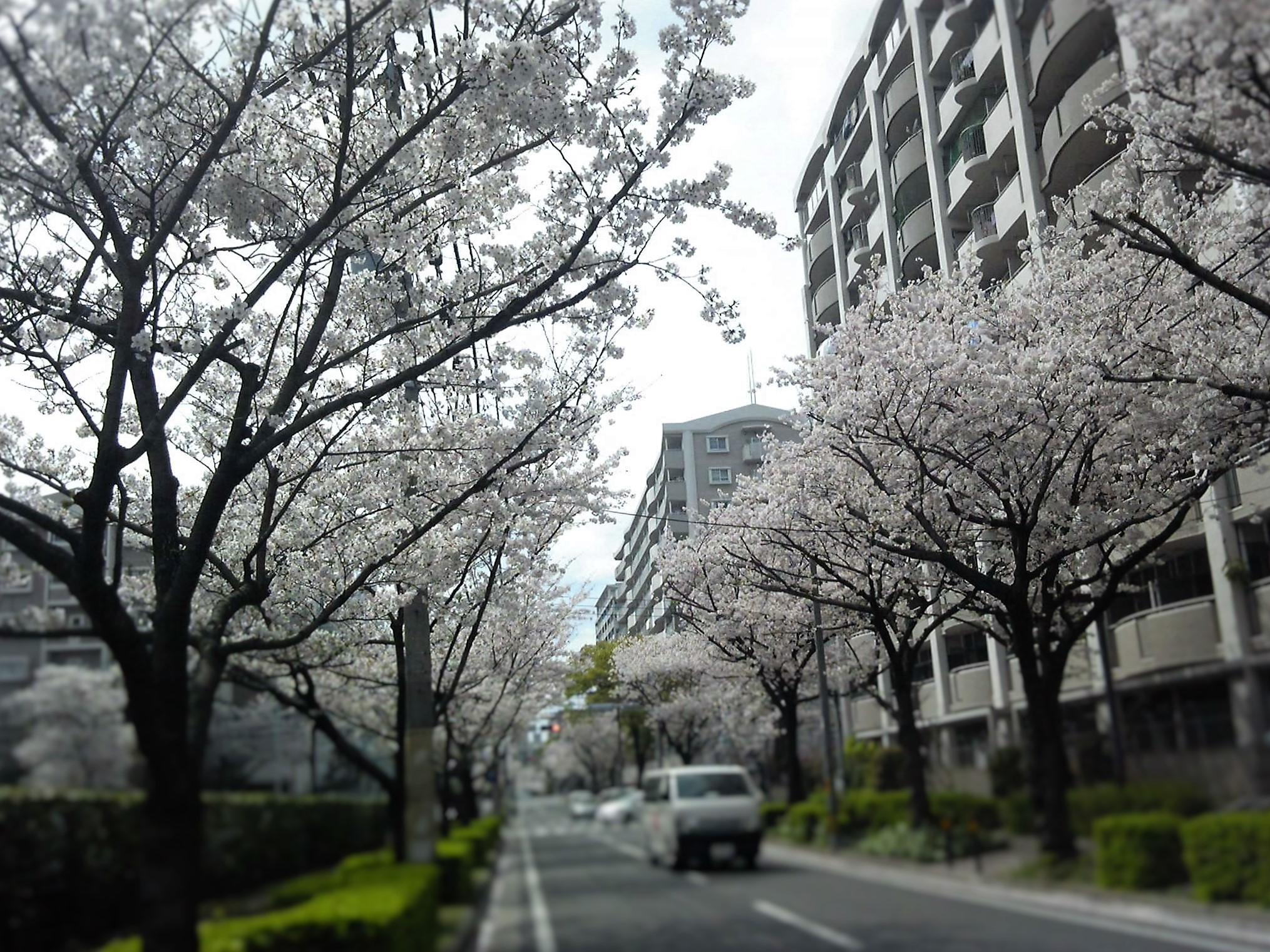 0402桜-1
