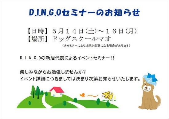 dingo5.jpg