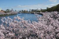 BL160402桜ラン3IMG_1509