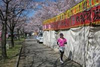BL160402桜ラン6IMG_1513