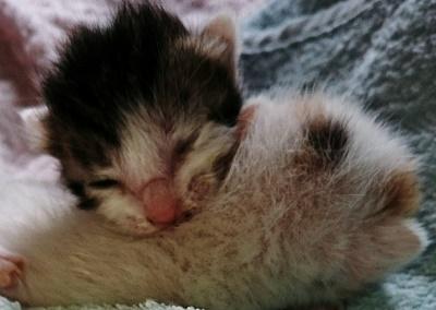 生後3日子猫ドンくん