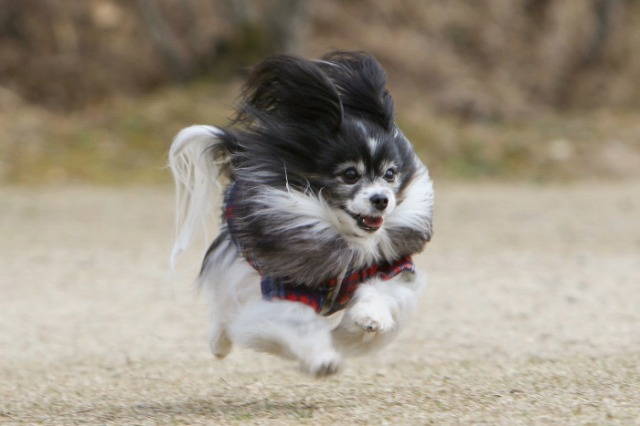 飛行犬マリィ!!!-1