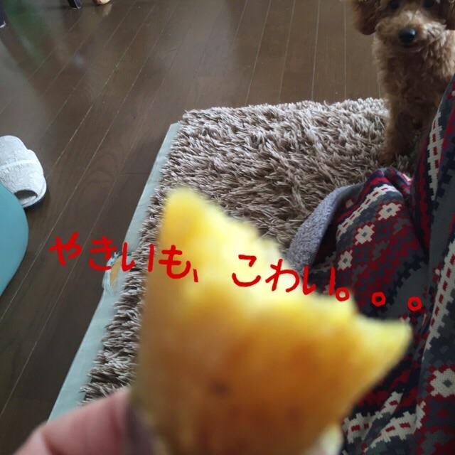 201512041753161d2.jpg