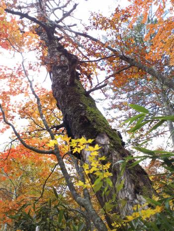 枯れ木も山の賑わい(27.10.13)