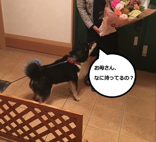まるちゃん2015102702