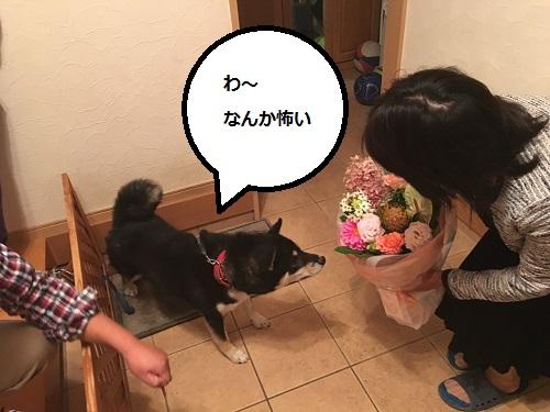 まるちゃん2015102703