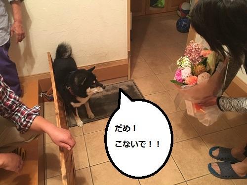 まるちゃん2015102704