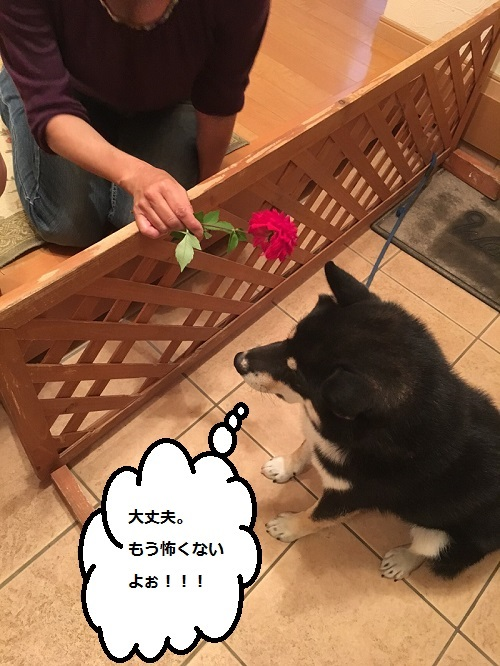 まるちゃん2015102902