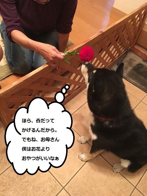 まるちゃん2015102903