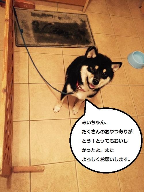 まるちゃん2015103004