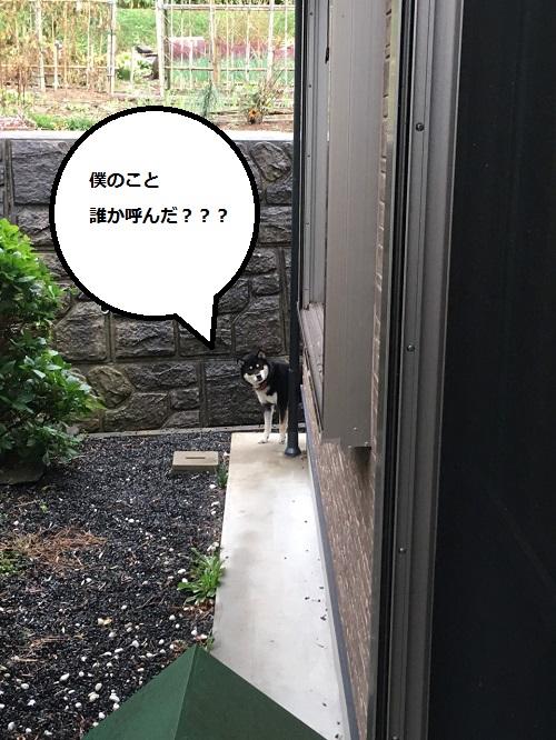 まるちゃん2015112301