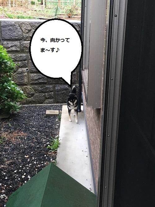 まるちゃん2015112302