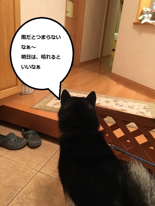 まるちゃん2015112601