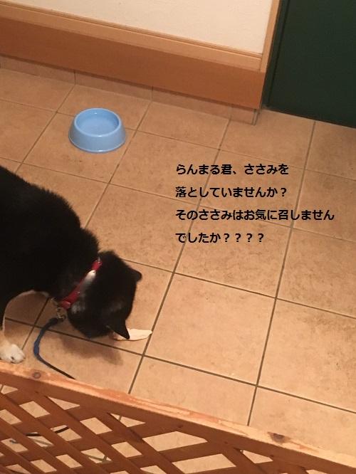 まるちゃん2015112801