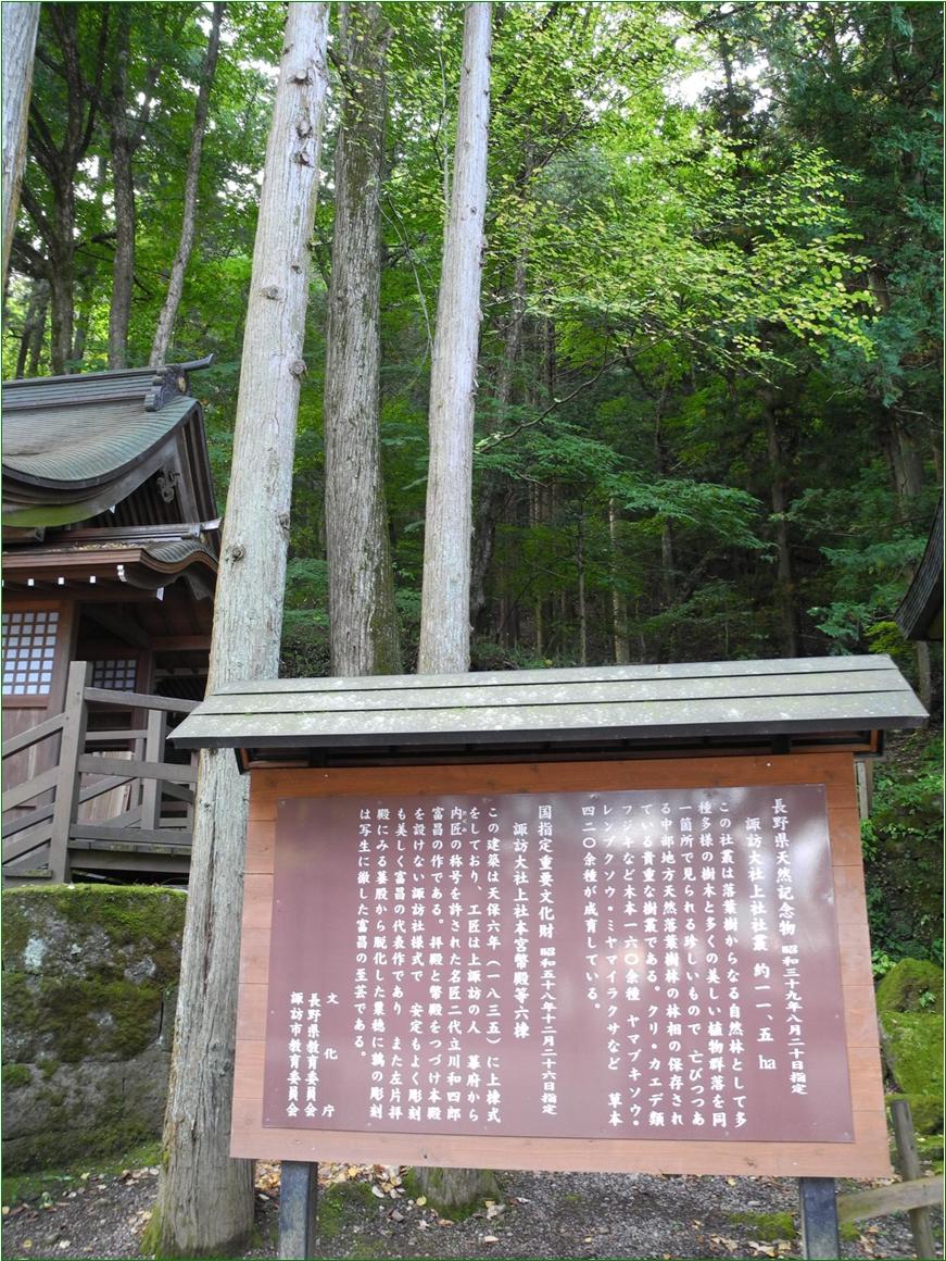 9-2 諏訪上社本宮ー7 151028