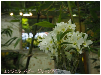 春の洋らん展14