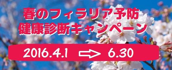 spring_kenshin.jpg