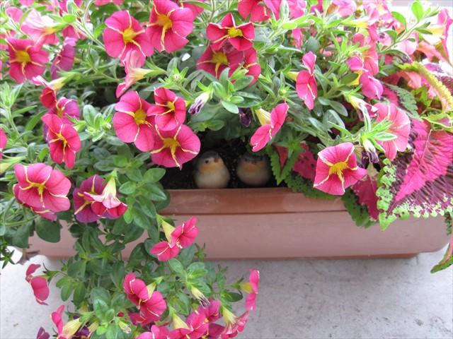 小鳥の巣になった植木鉢