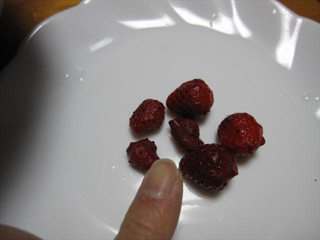 四季なりイチゴ トスカーナ-2