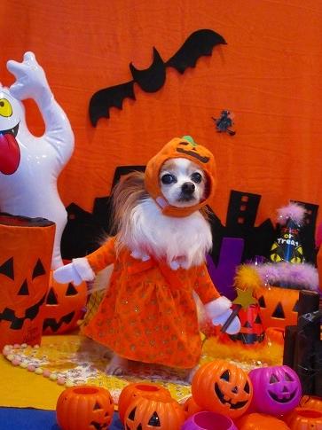 Happy Halloween☆彡★