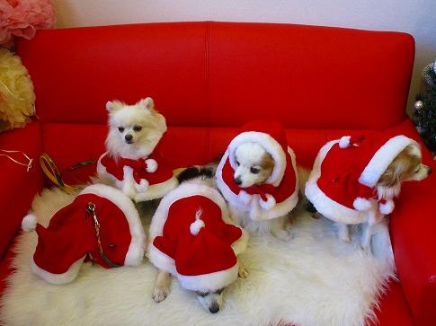 クリスマス気分 15.11.11*