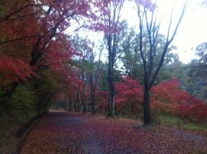 宮沢湖の紅葉