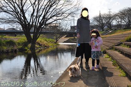sakurakaika201604.jpg