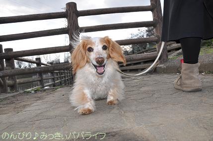 sakurakaika201605.jpg